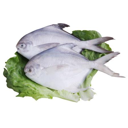 海天下 冷冻深海大鲳鱼 袋装 冷链直达