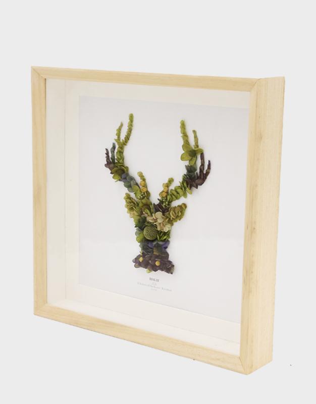 森林精灵-麋鹿