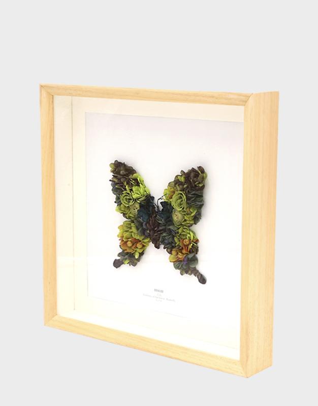 森林精灵-许愿蝶