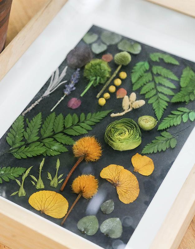 永生植物标本-春