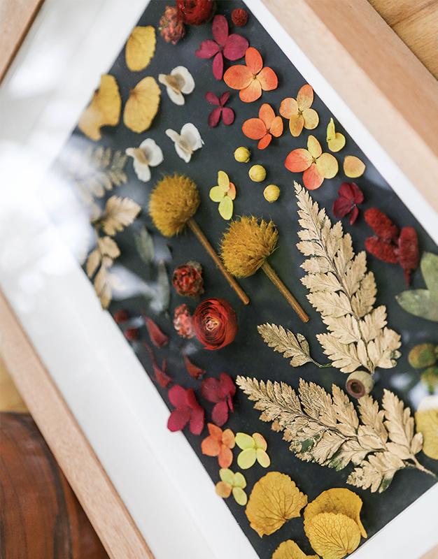 永生植物标本-秋