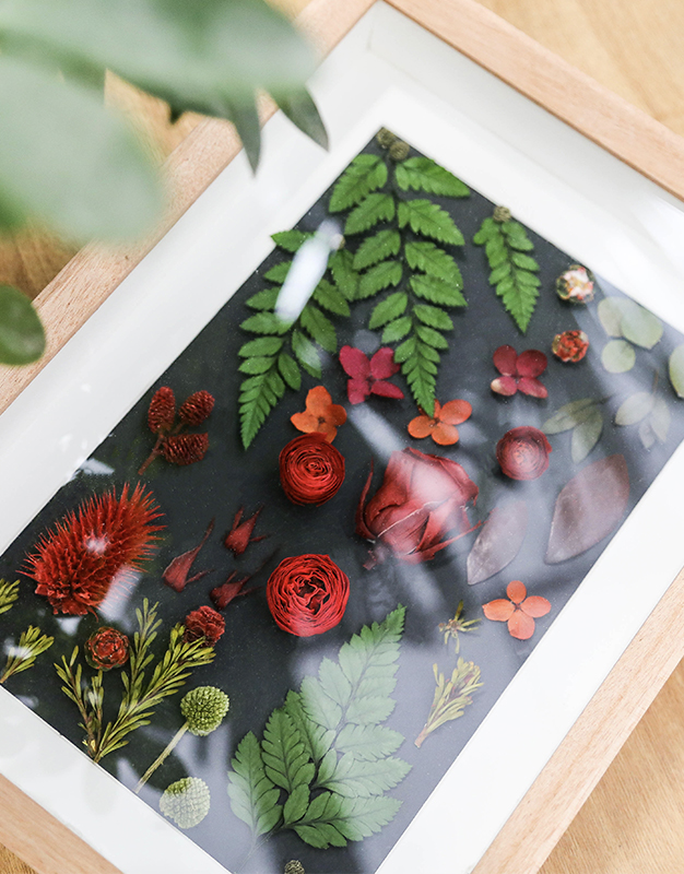 永生植物标本-冬